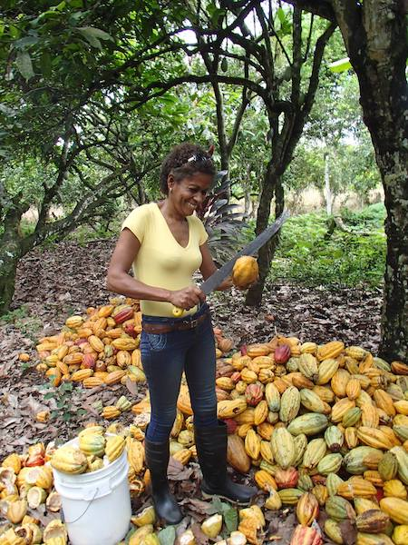 Ana récolte cacao©