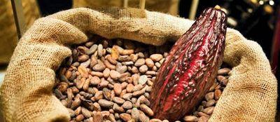 Fèves de cacao et cabosse©ChocoClic.com