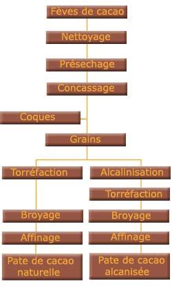 Le traitement des fèves de cacao