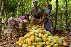 Magnum donne une nouvelle dimension au plaisir en s'associant à Rainforest Alliance
