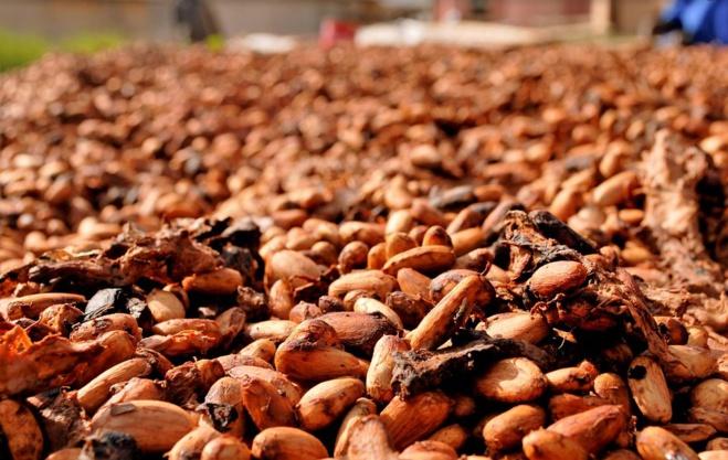 fèves-de-cacao-séchés