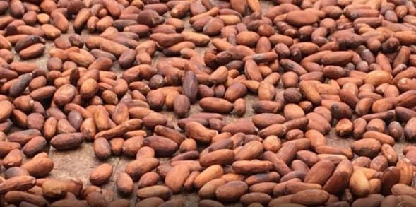 Collaboration étroite entre le Ghana et la Côte d'Ivoire pour protéger leur industrie de cacao