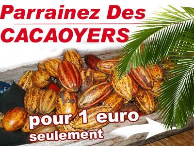 Parrainer 1 cacaoyer pour seulement 1euro !