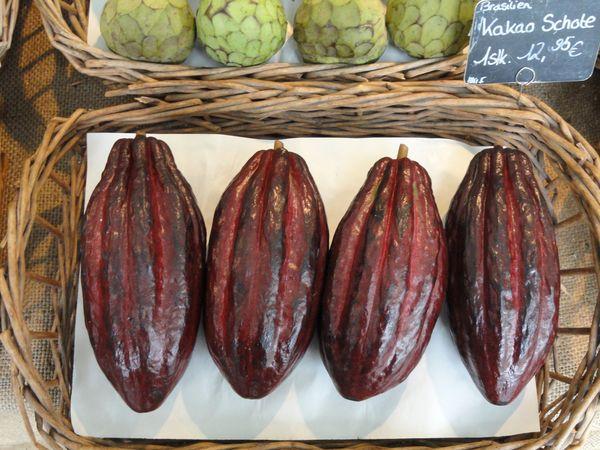 Fruits du cacaoyer©