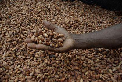 Fèves de cacao séchant au soleil