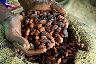 Cacao dans les mains d'un fermier