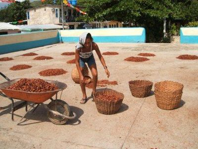 La Plantation cacao : Chuao