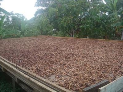 Cacao : Afrique versus Indonésie
