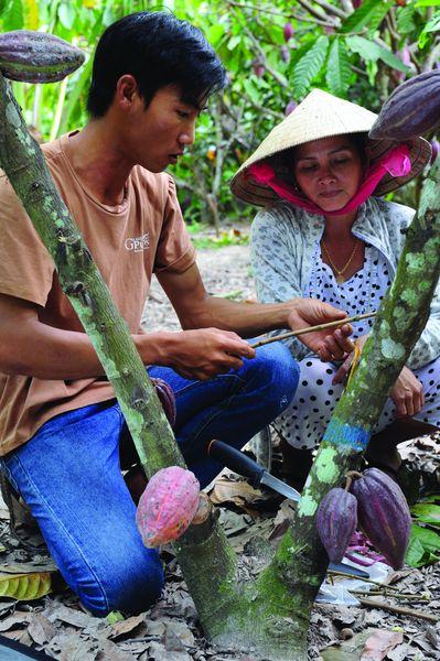 Cacao Trace Formation plantation Origins - Vietnam©