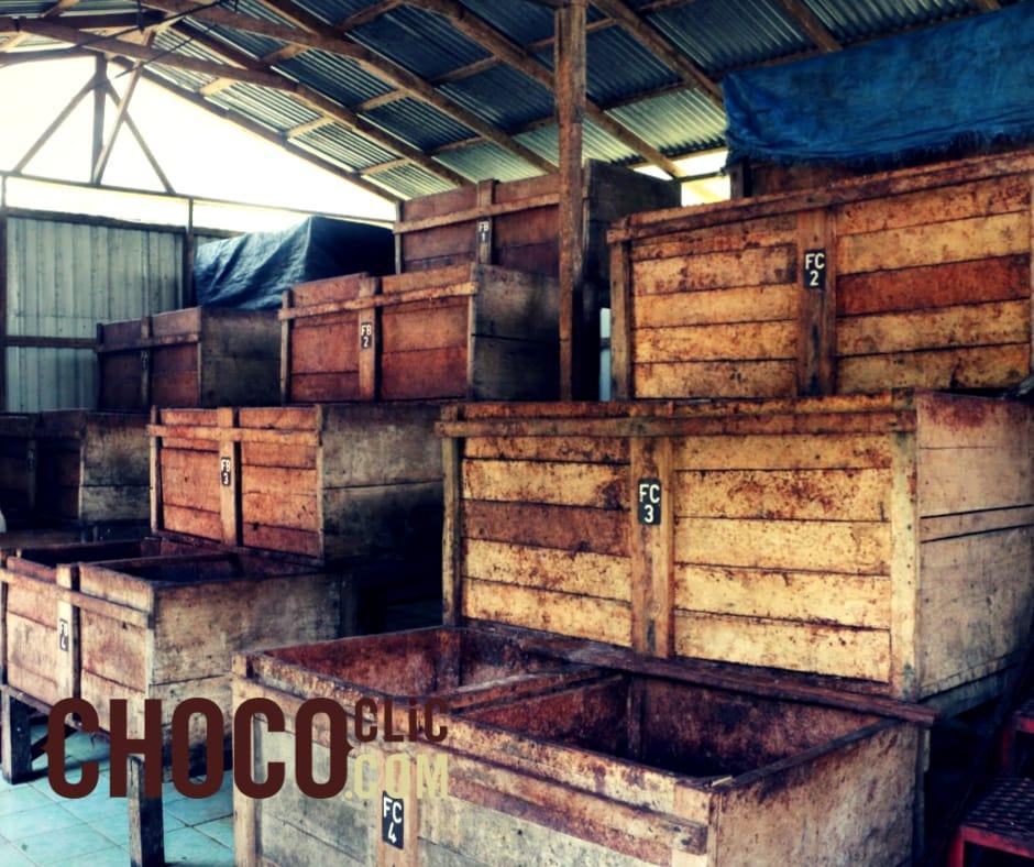 La fermentation des cabosses