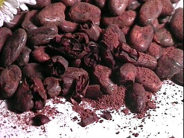 Fèves de cacao séchées©