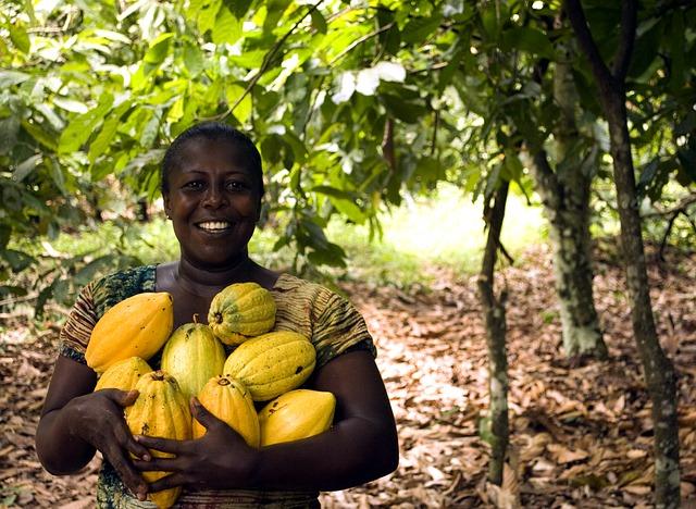 Récolte de fèves de cacao©