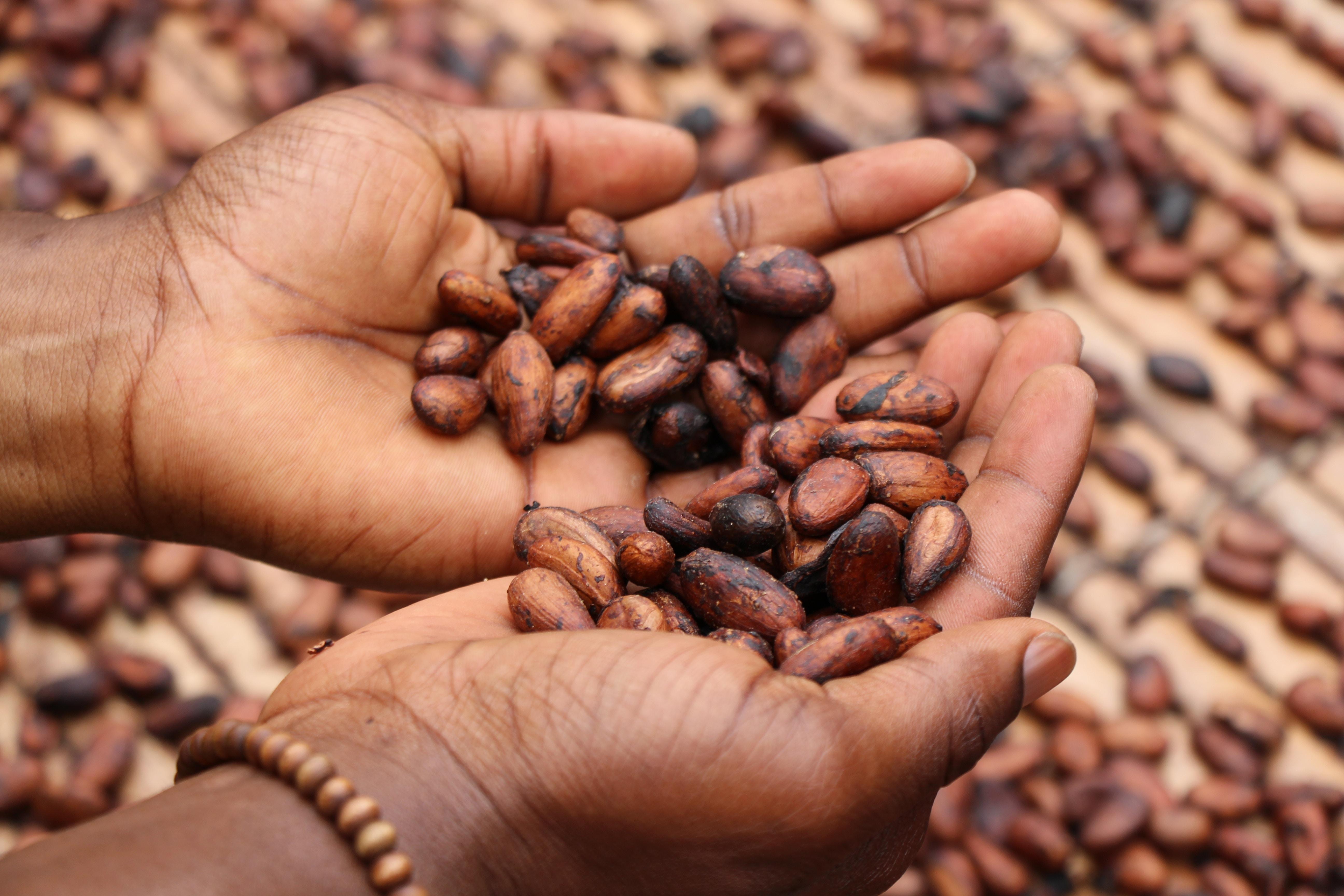 Fèves de cacao©Etty Fidele