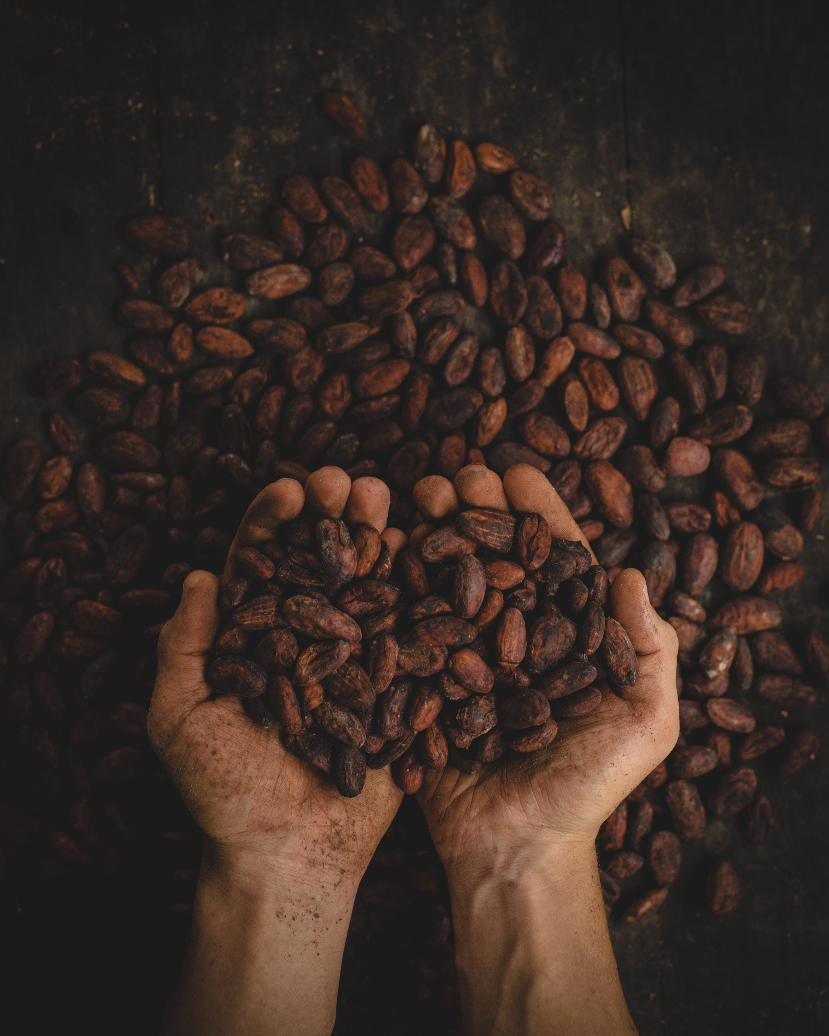Fèves de cacao©pablo-merchan-montes