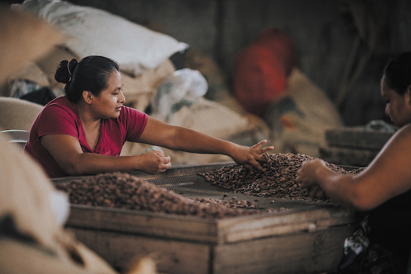 Fèves de cacao Valrhona©