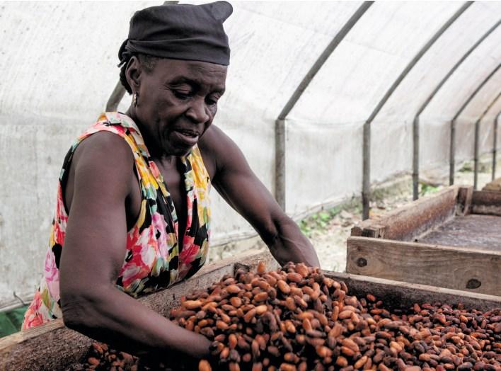 Cultivateur de cacao©