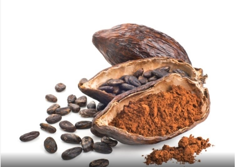 flavanol de cacao