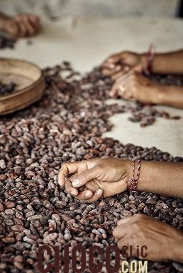 L'enseignement de l'industrie Unhas collabore avec une société de production de cacao Japonaise