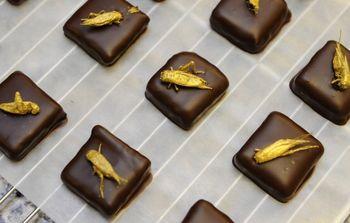 Insectes et chocolats : un mariage qui ne dit pas son nom !