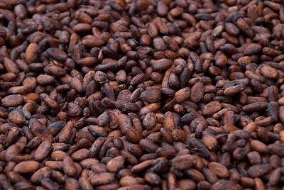Lancement du plan Cocoa Action