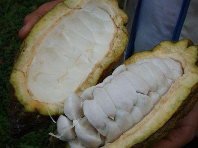 Le développement durable dans les plantations
