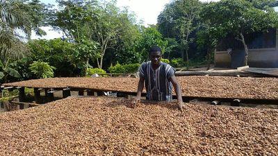 Ferme cacao