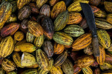 Fèves de cacao