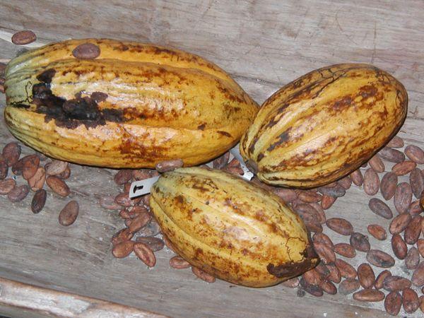 Cabosses et fèves de cacao©