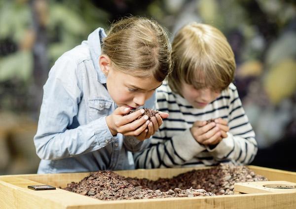 Des enfants sentent les fèves de cacao au Musée du Chocolat de la Maison Cailler©