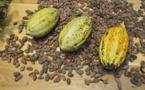 Le Centre d'Innovation du Cacao d'Olam Cocoa
