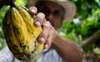 Soigner l'avenir du cacao