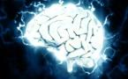 Cerveaux©