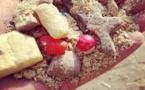 Mayura : des bœufs nourris au chocolat