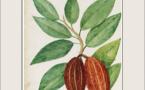Découvrez « Cacao », le livre exceptionnel de Michèle Kahn