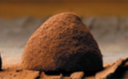 The new chocolate truffles from LEONIDAS: 100% Tradition