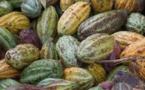 La Confédération des Chocolatiers Confiseurs de France célèbre les artisans chocolatiers…