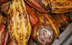 Le Cacao Trinitario (Cacaoyer)