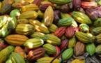 Le Centre de Recherche du Cacao