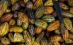La Chocolat 'Hier et sa création régionale : la Cagouille Saintongeaise