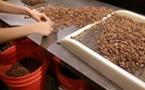 Les pays membres de l'Organisation internationale du Cacao s'orientent vers une économie durable dans l'industrie du cacao.