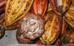 Frigoulette : un chocolat pur, bon pour le plaisir et pour la santé
