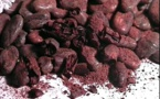 CUNAKakaw : les cacaos Fino de Aroma made in Maya !