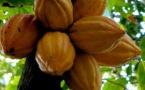 Le Cercle du Cacao à Cuba