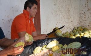 L'écabossage du cacao