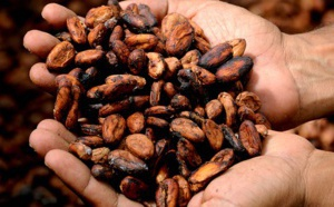 L'avenir de la fermentation du cacao