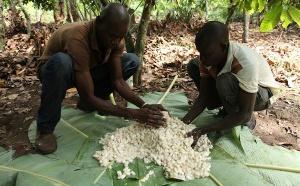 La transformation du cacao par Barry Callebaut…