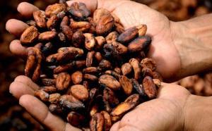 Le cacao et le coronavirus : peut-il renforcer le système immunitaire?