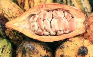 """Côte d'Ivoire : le """"fléau"""" du travail des enfants dans les plantations de cacao"""