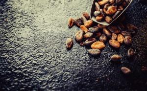 Un nouvel Espoir s'offre à la culture du cacao en Afrique de l'Ouest