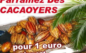 Plantez des cacaoyers au Vietnam